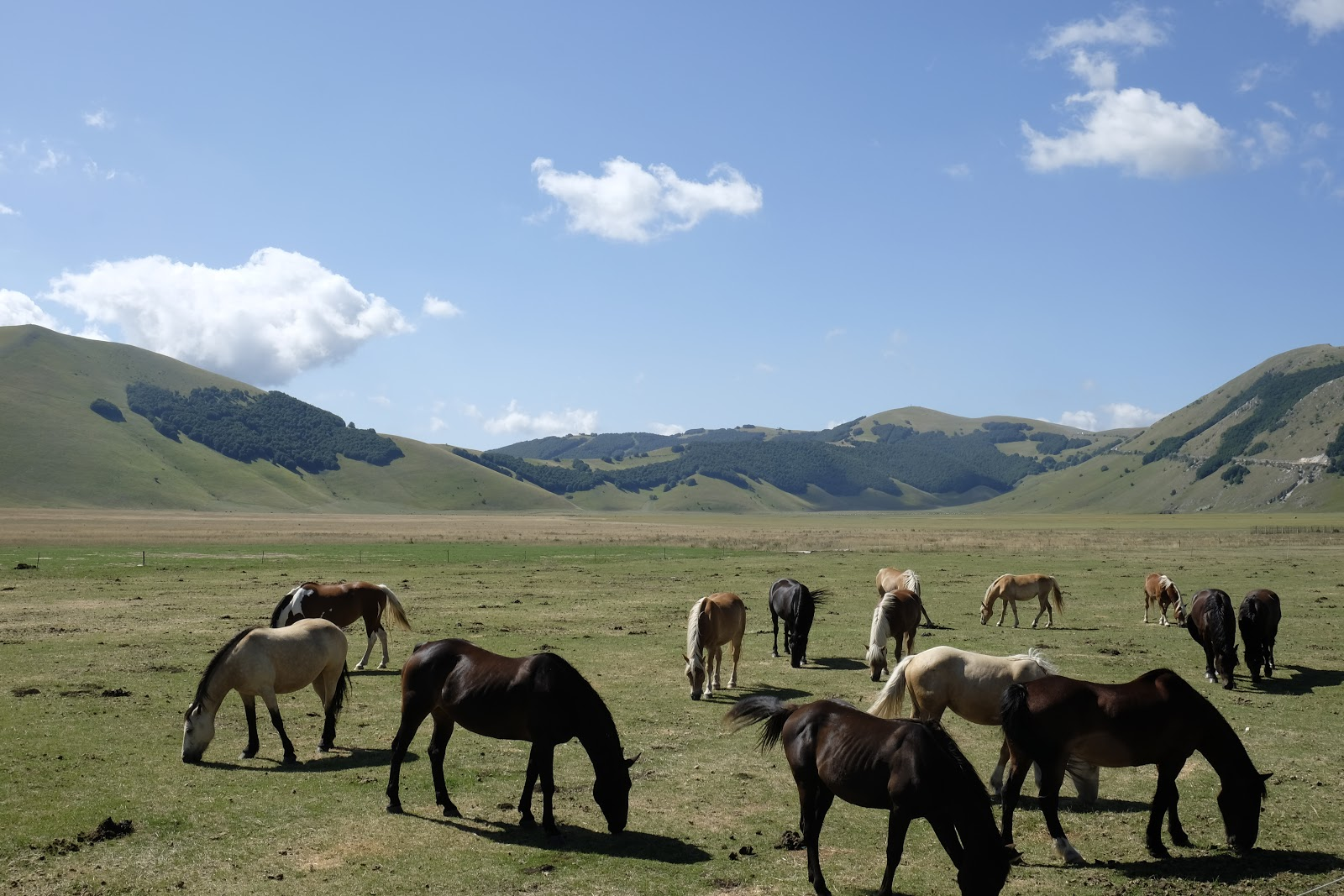 One of the views Marzena enjoyed on her sabbatical - horses on a plain.